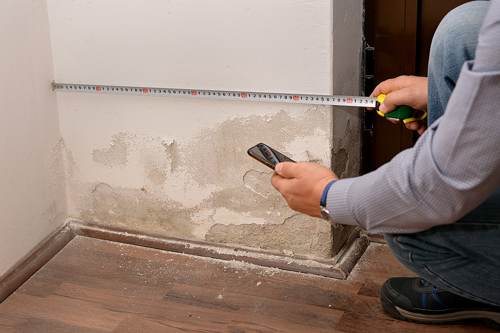 Mold Remediation & Removal Services: Novi, MI | MJ White & Son - AdobeStock_233236403